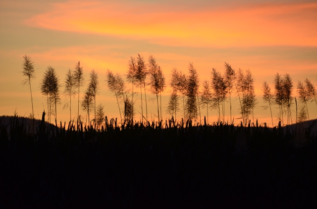 2013-06-14 sunsetmurrayupper 047