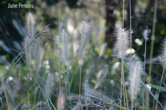 victoriaparkgrass