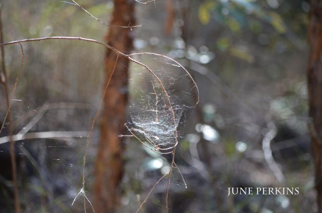 Nature_2015-10-10 047