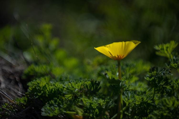 Nature, Flower, Nikon, Photography, California