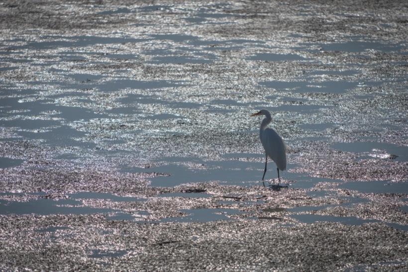 Nature, Wildlife, Landscape, Nikon, Bird, California