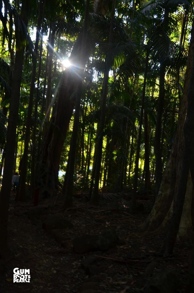 DSC_0498forest